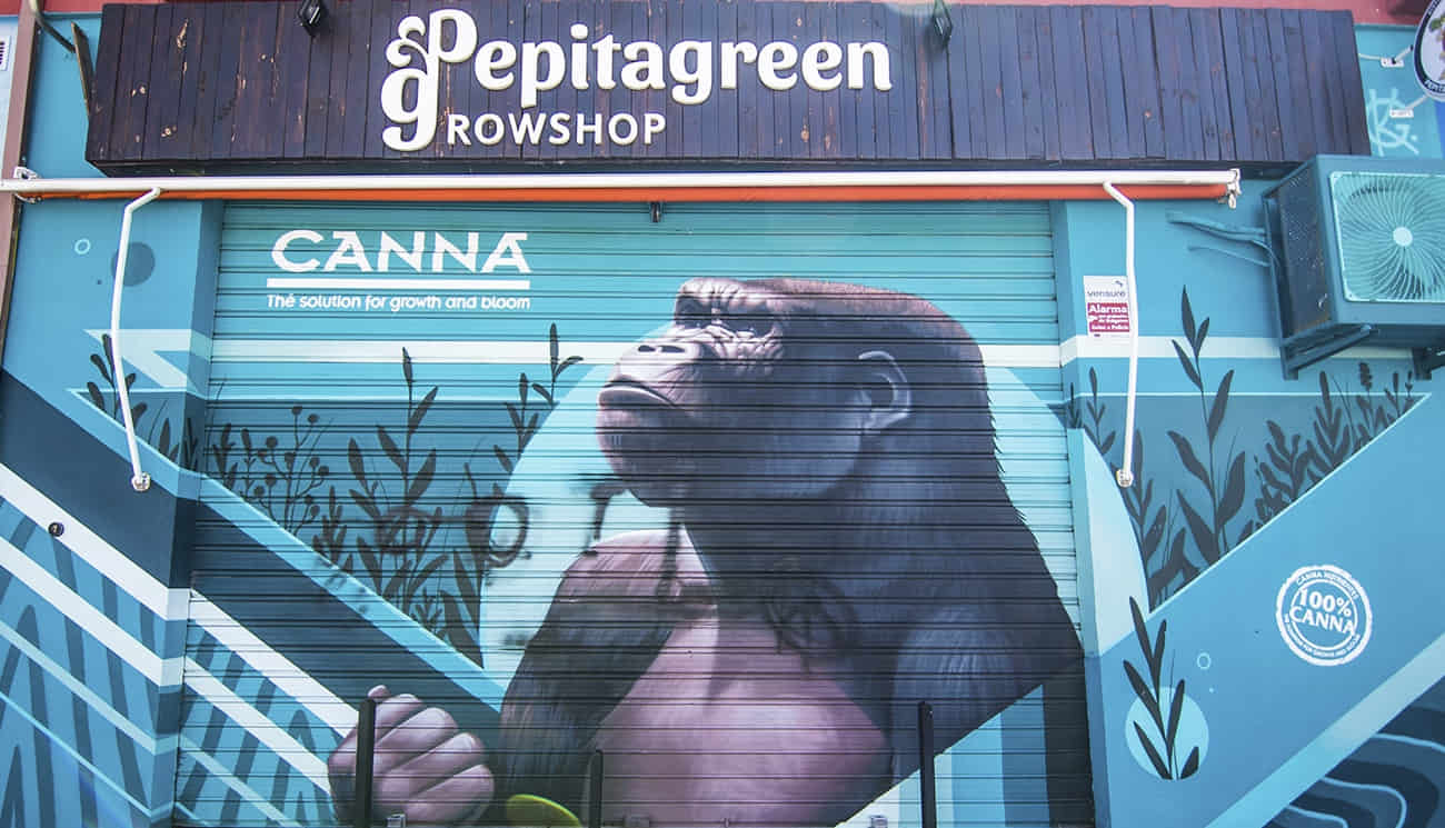 Persiana con el dibujo de un gorila de la puerta principal del Grow Shop en Granada PepitaGreen que también ofrece el servicio de Growshop online